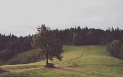 Pastoraat reikt verder dan hen die daarom vragen