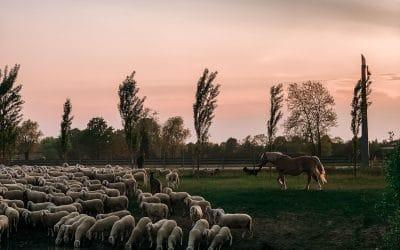Eén kudde en één Herder