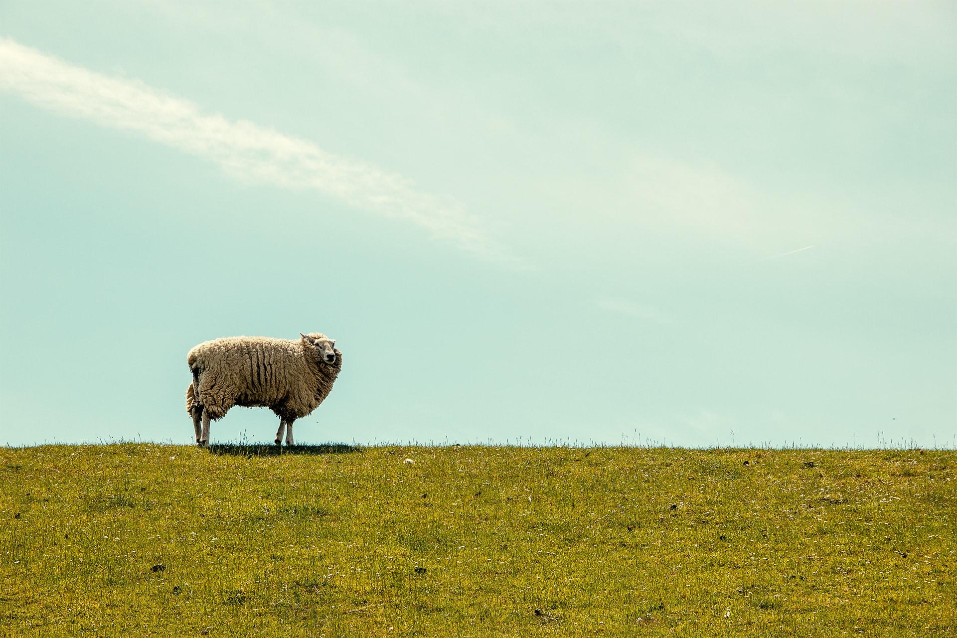 Psalm 23: Gods zorg voor Zijn schapen - Steven Middelkoop - Vorming voor elke dag